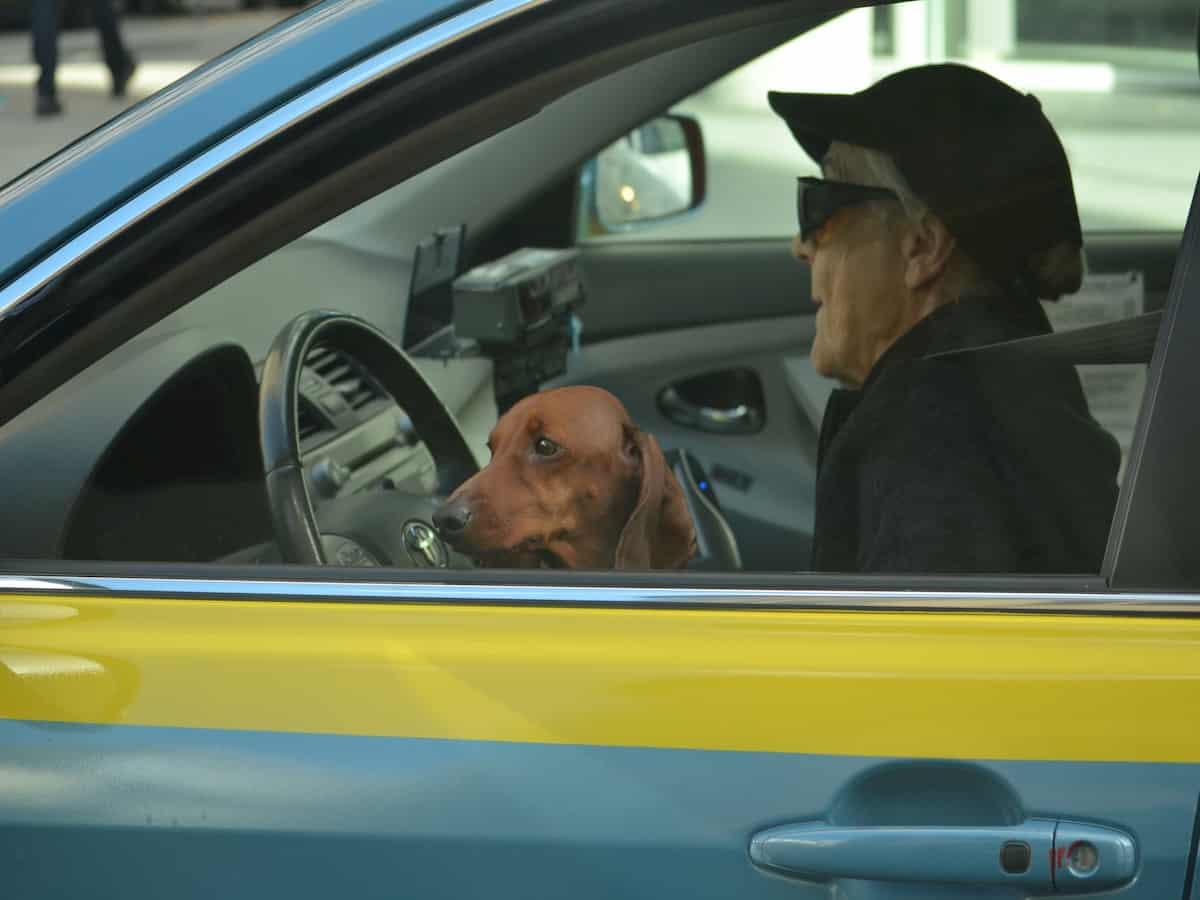Transportar cão e gato no carro
