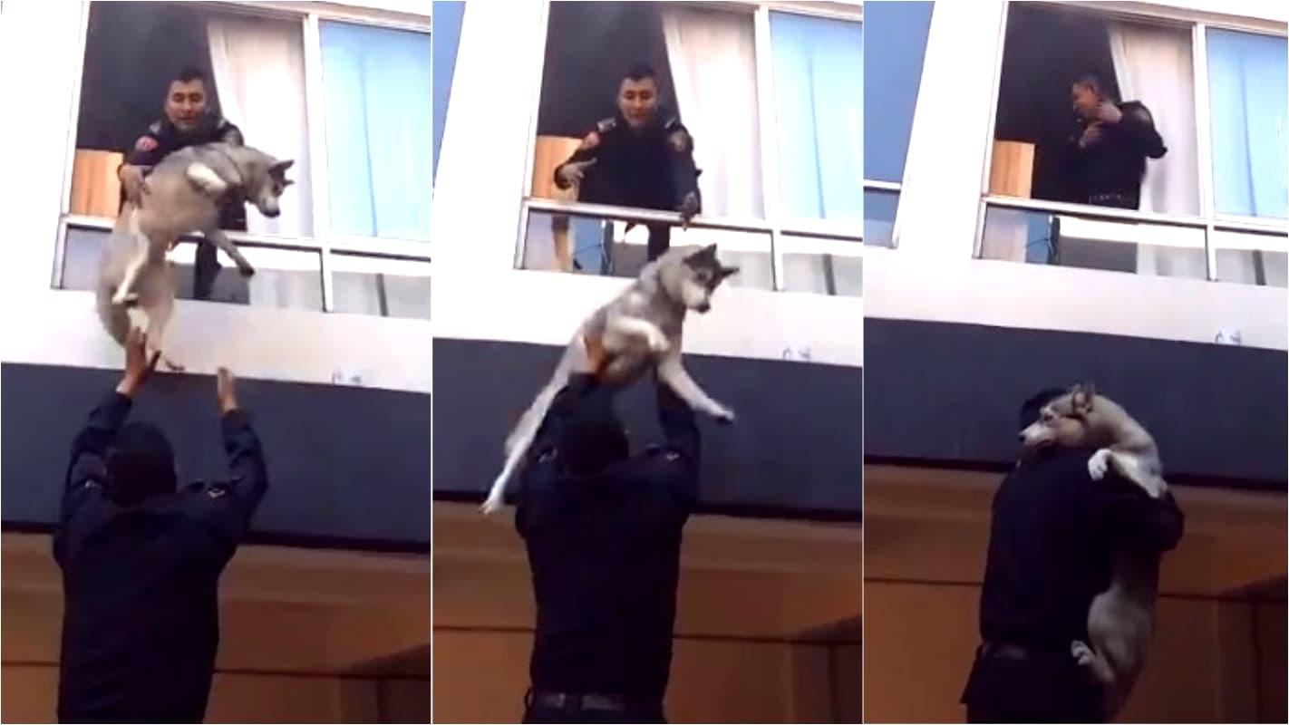 Resgate do cão husky siberiano na cidade de México dentro de um apartamento em chamas