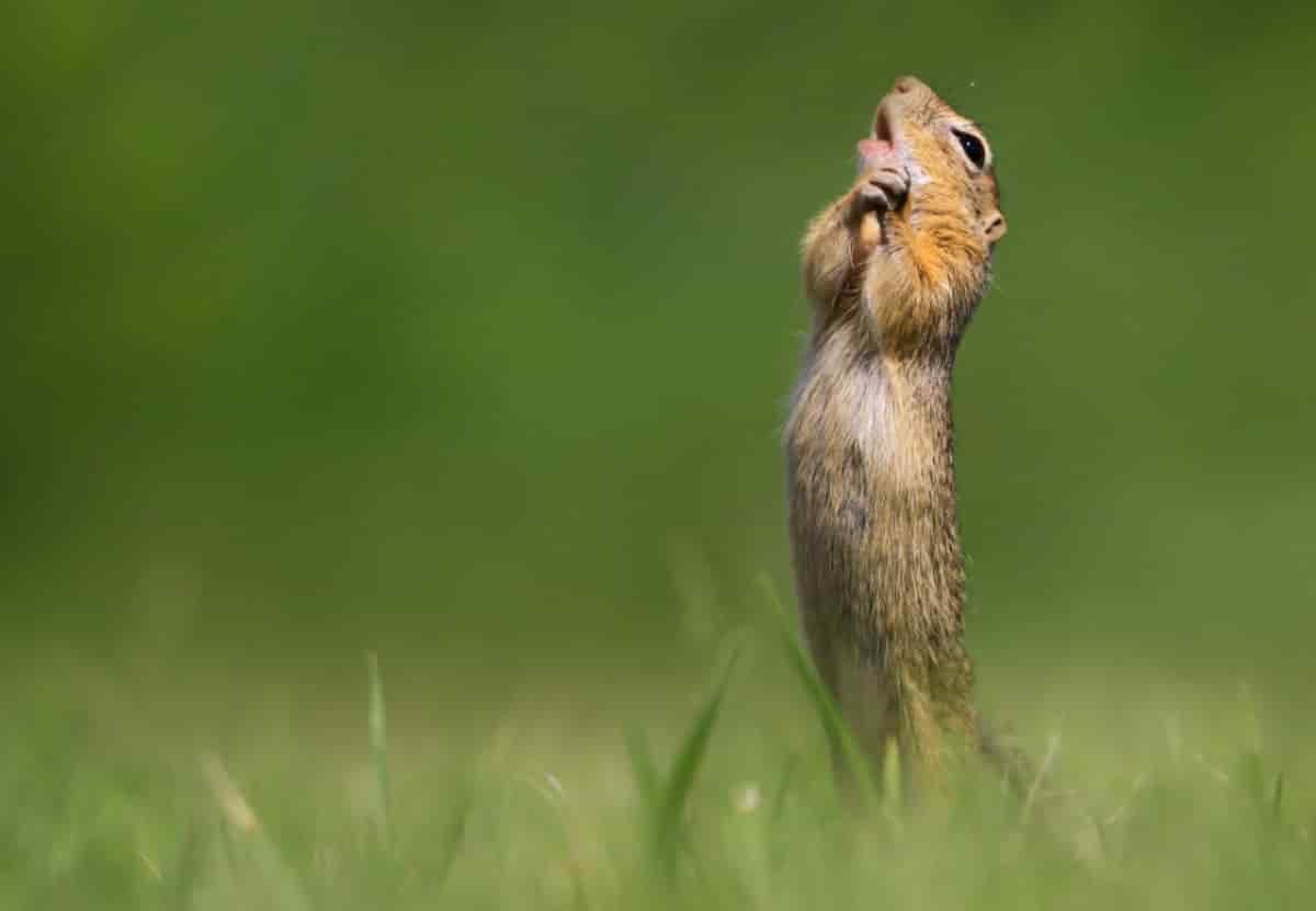 esquilo a pedir a deus na vida selvagem, wildlife