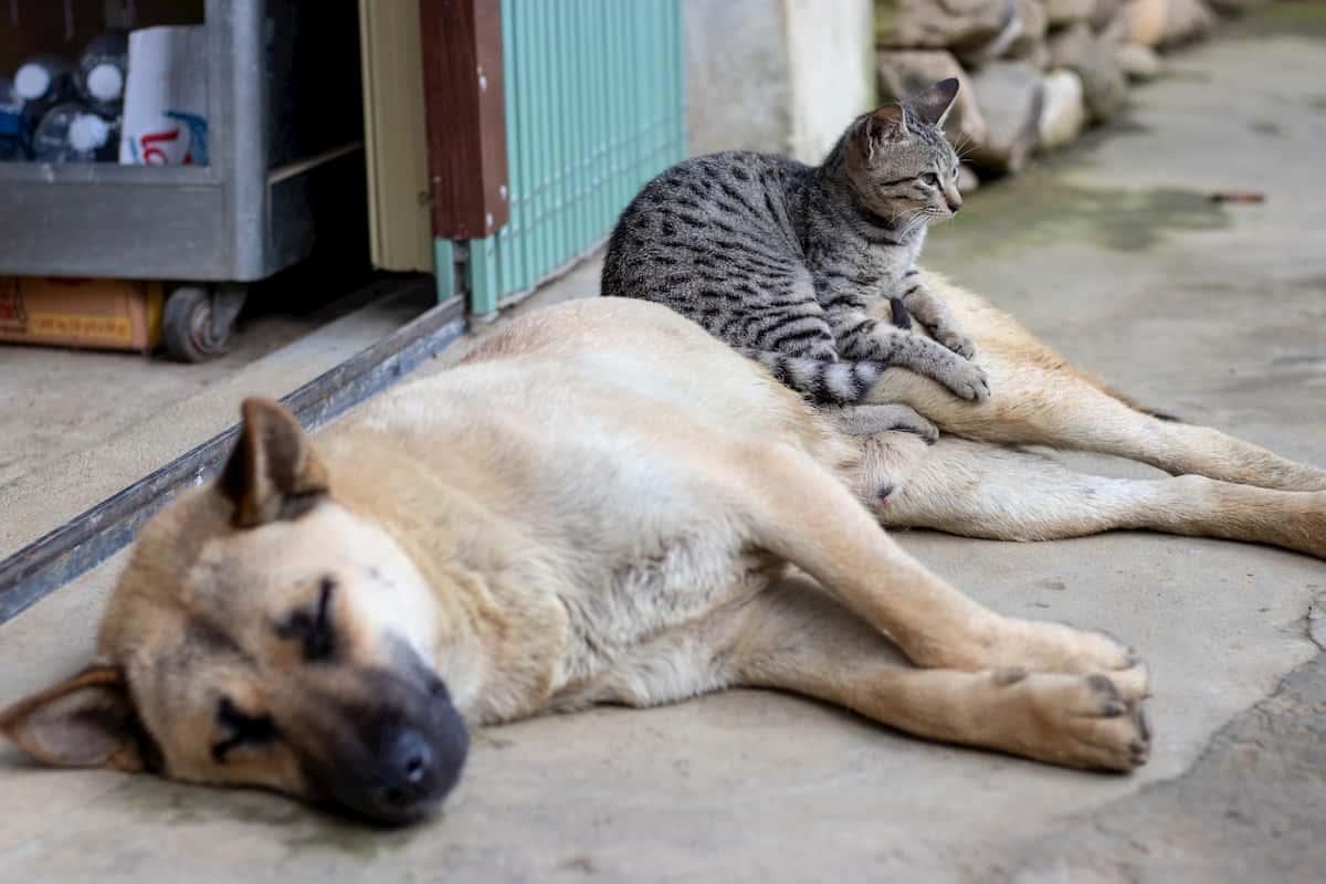 Os cães e gatos comunicam entre si! Saiba como