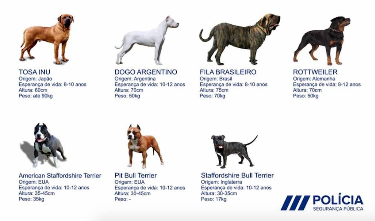 lista de cães potencialmente perigosos