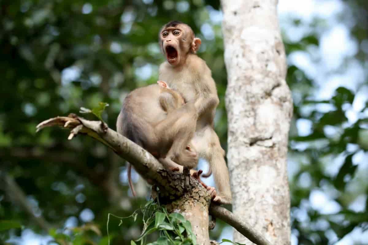 macacos a fazer outros estilo de atos, vida selvagem, wildlife