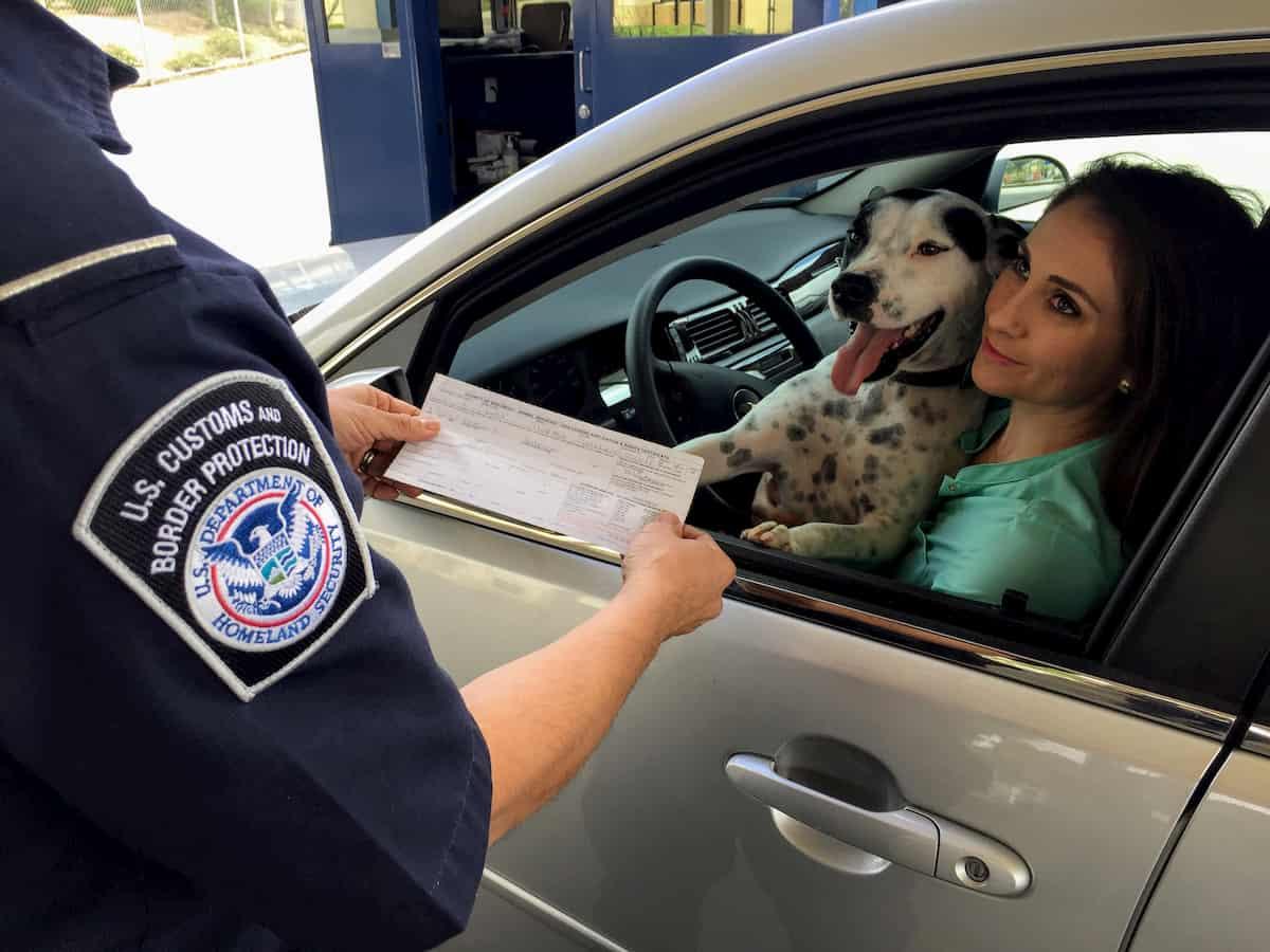 cão a viajar na parte de frente do carro e aser multado
