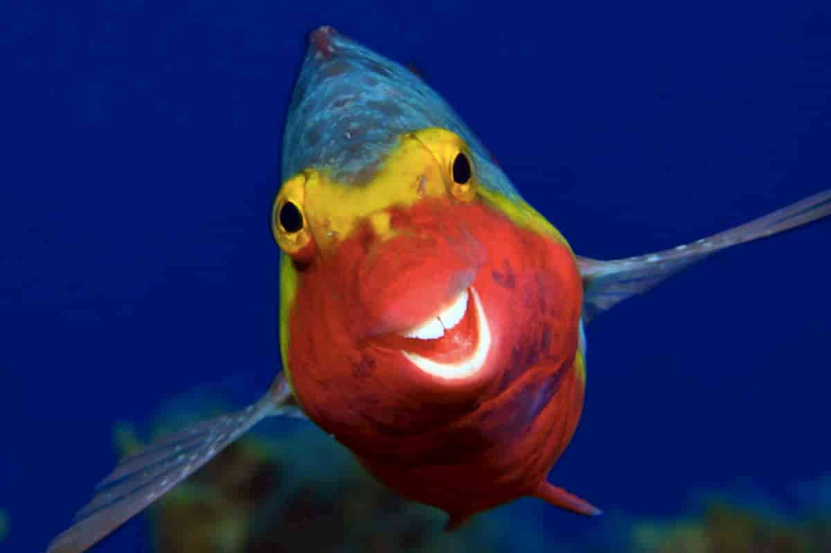 peixe que ri no meio do oceano, wildlife