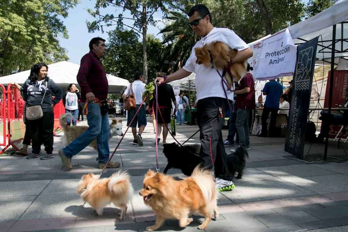 proteção de animais, organização em méxico