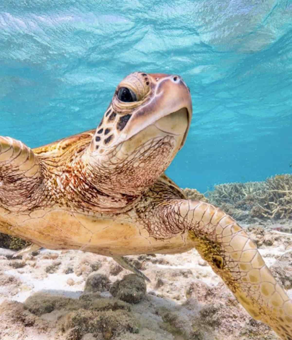 outro angulo do terry que mostra o dedo do meio, tartaruga