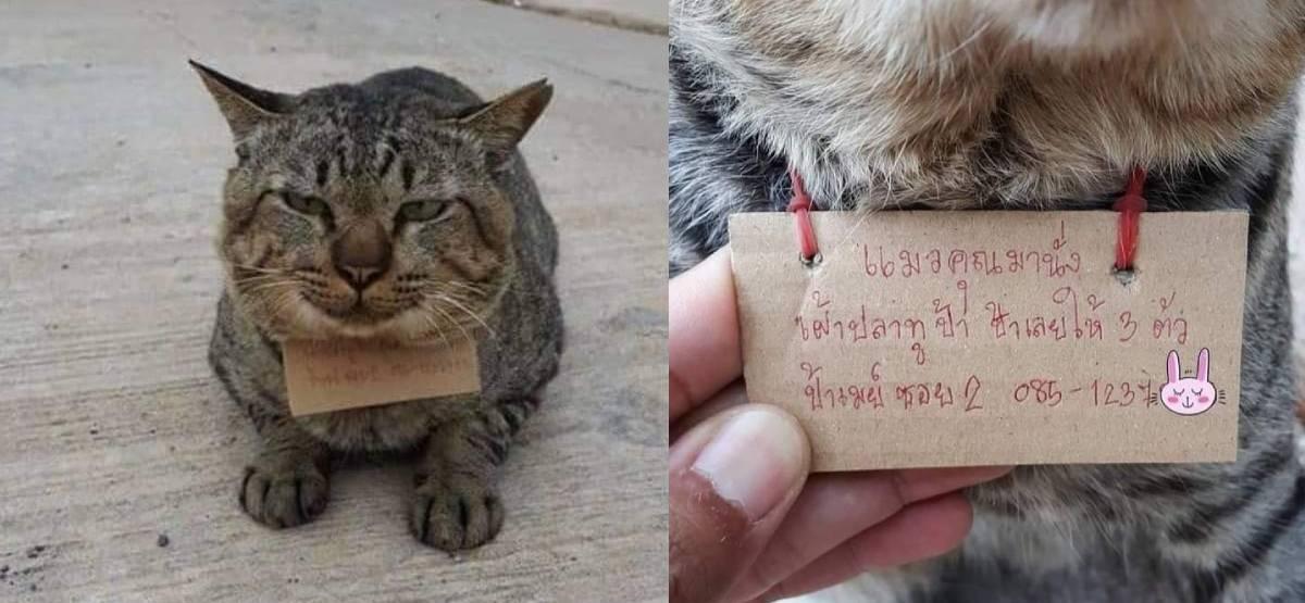 gato em tailandia que rouba peixes de local