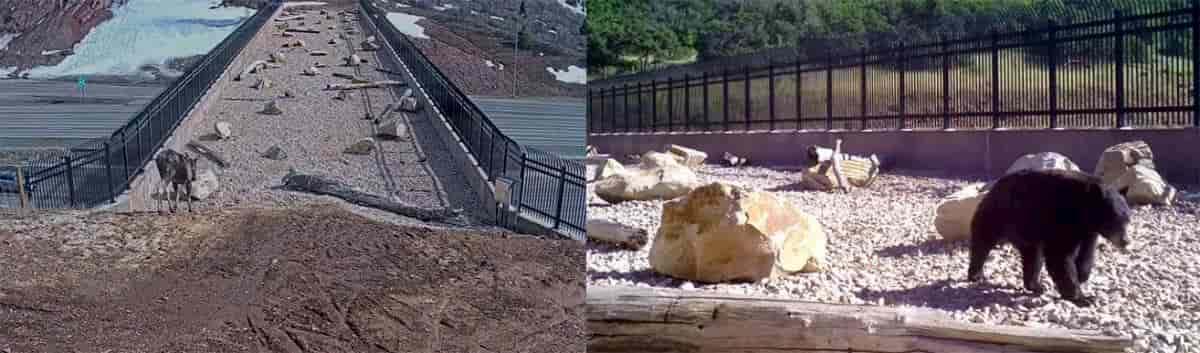 animais a atravessar a ponte de utah