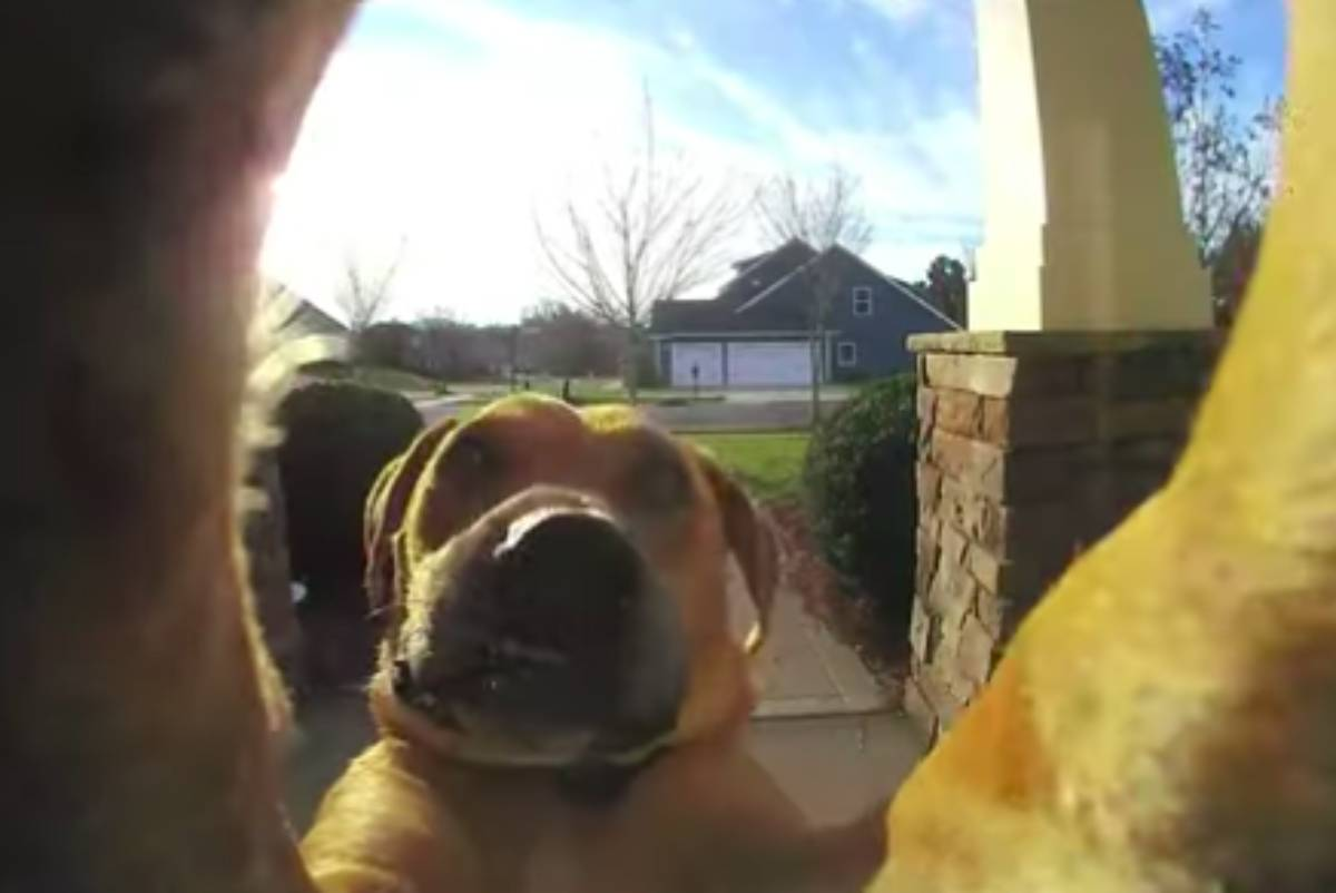 cães a tocar a campainha ring