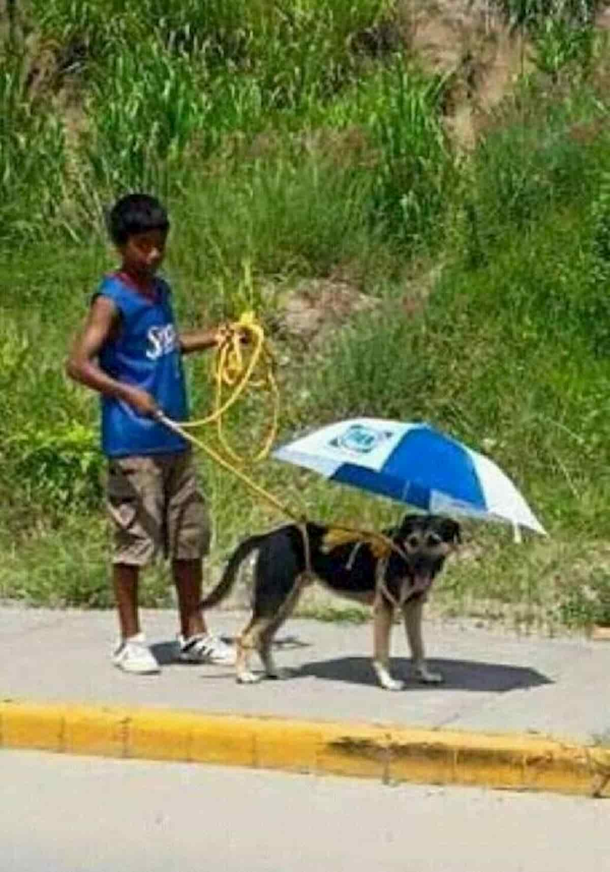 cão protegido do sol com guarda sol