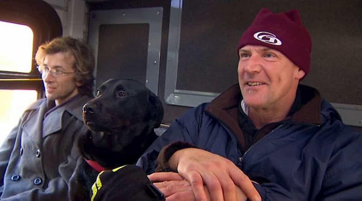 cão labrador sentado no autocarro