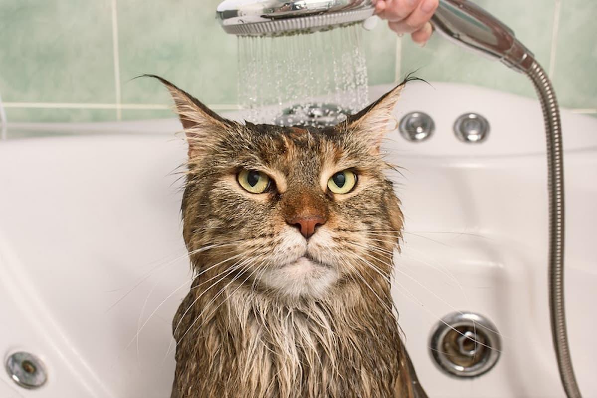 Gato a tomar banho