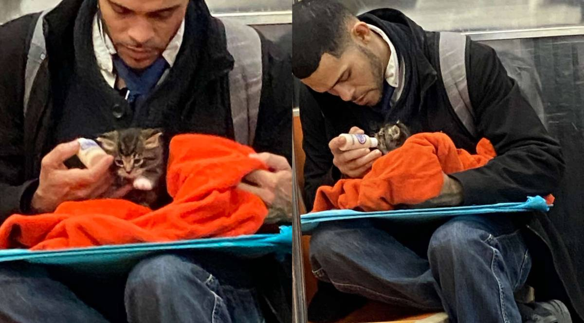 homem alimentando gato bebe no metro de nova york