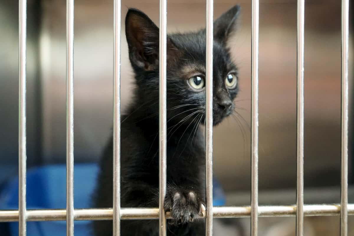 gato dentro de gaiola em um abrigo de animais