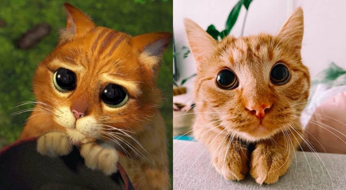felino com olhar de gato das botas