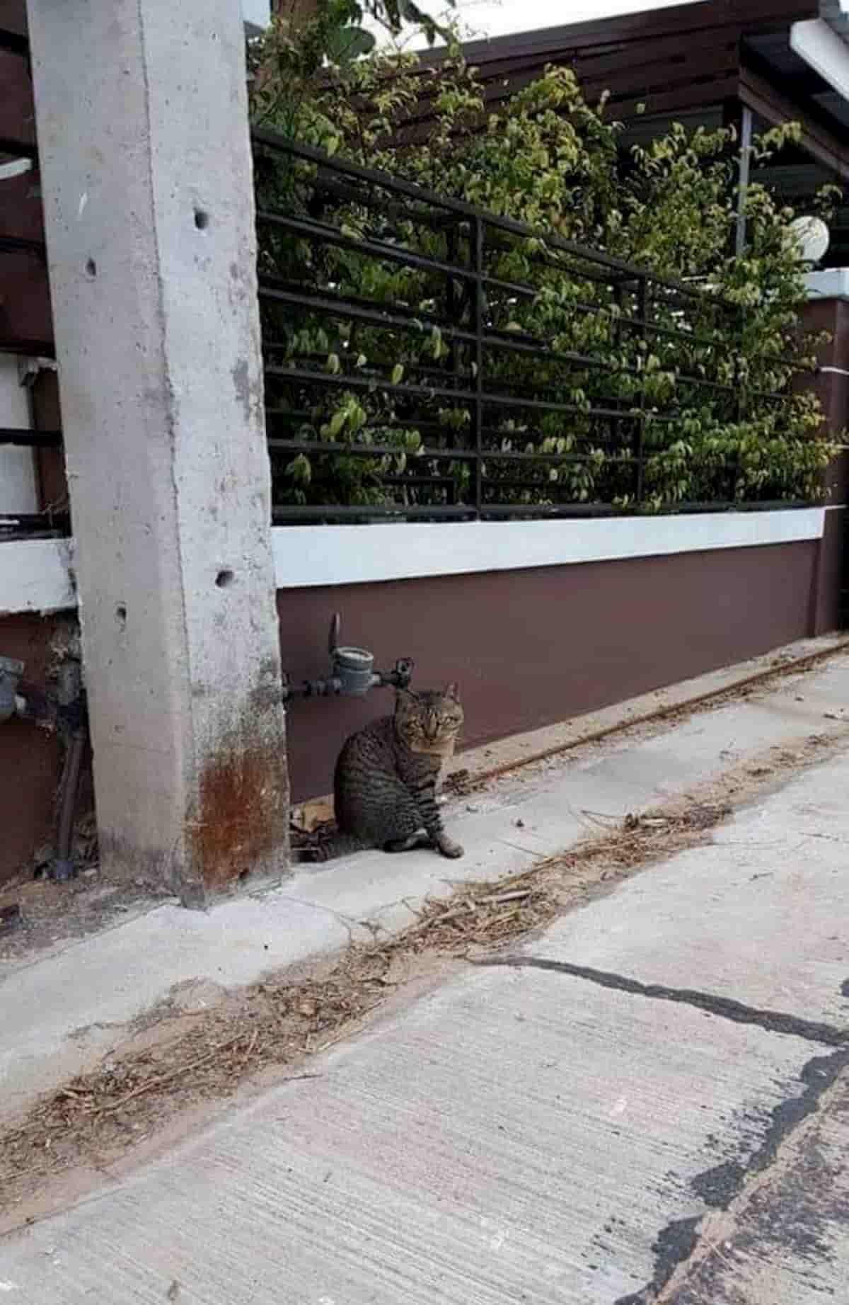 gato parado no meio do passei com uma nota no pescoço