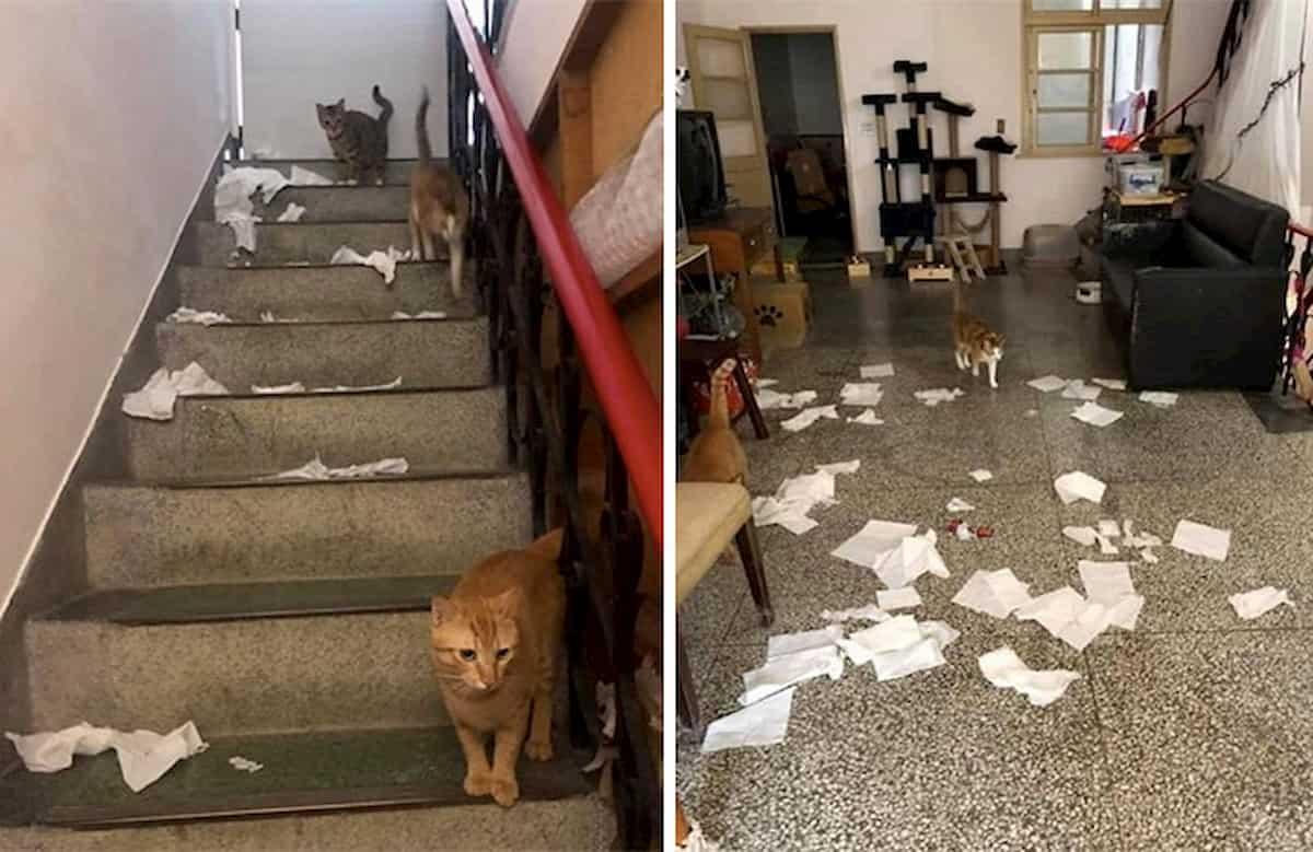 gatos destroem casa por não serem alimentados a horas