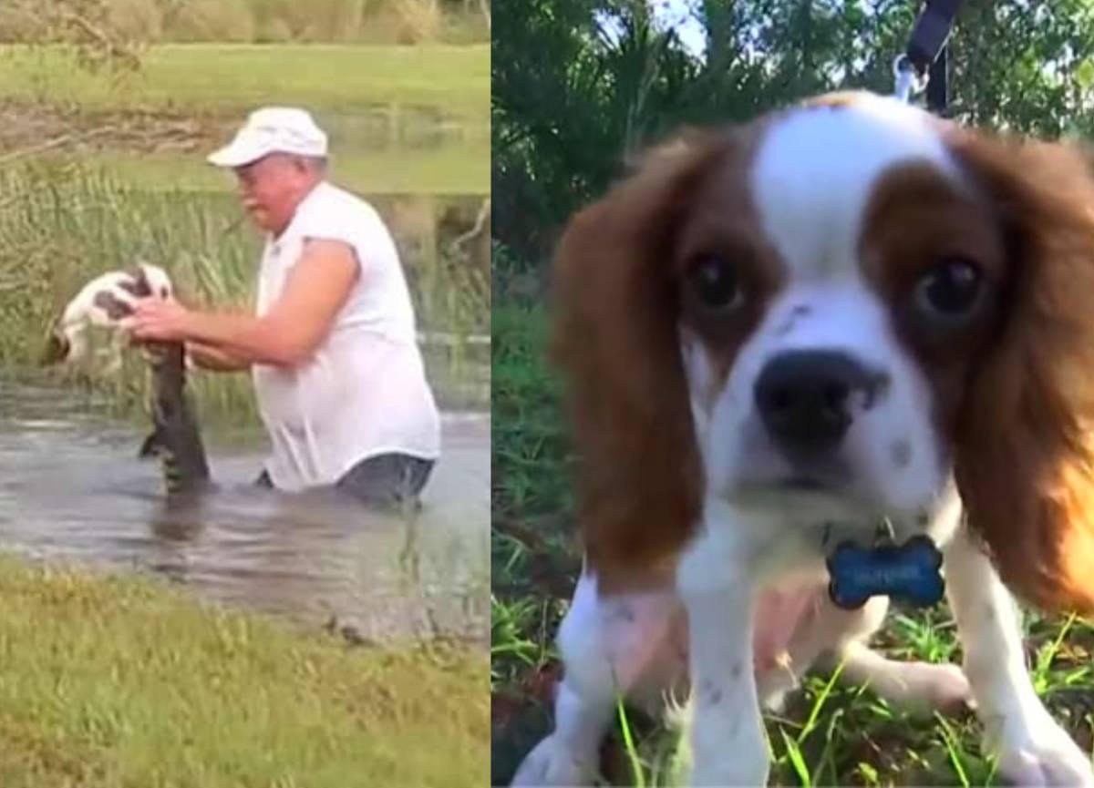 cão bebé gunner e dono a lutar contra predador