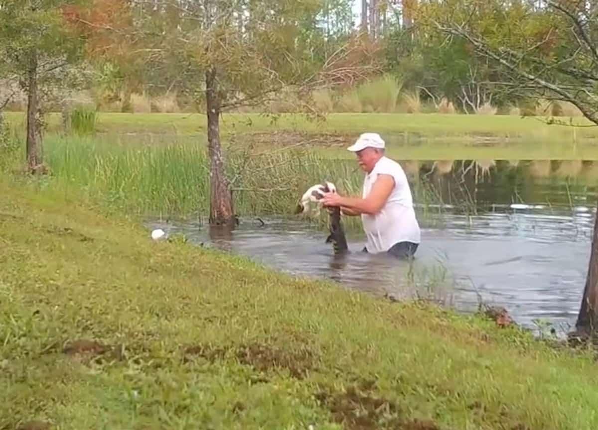 homem a lutar crocodilo no lago