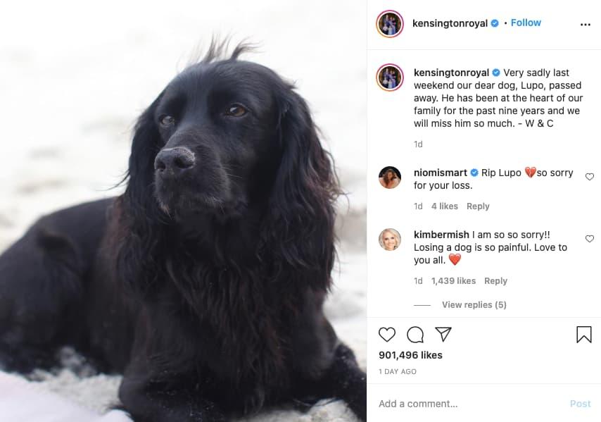 cão cocker spaniel inglês nas redes sociais