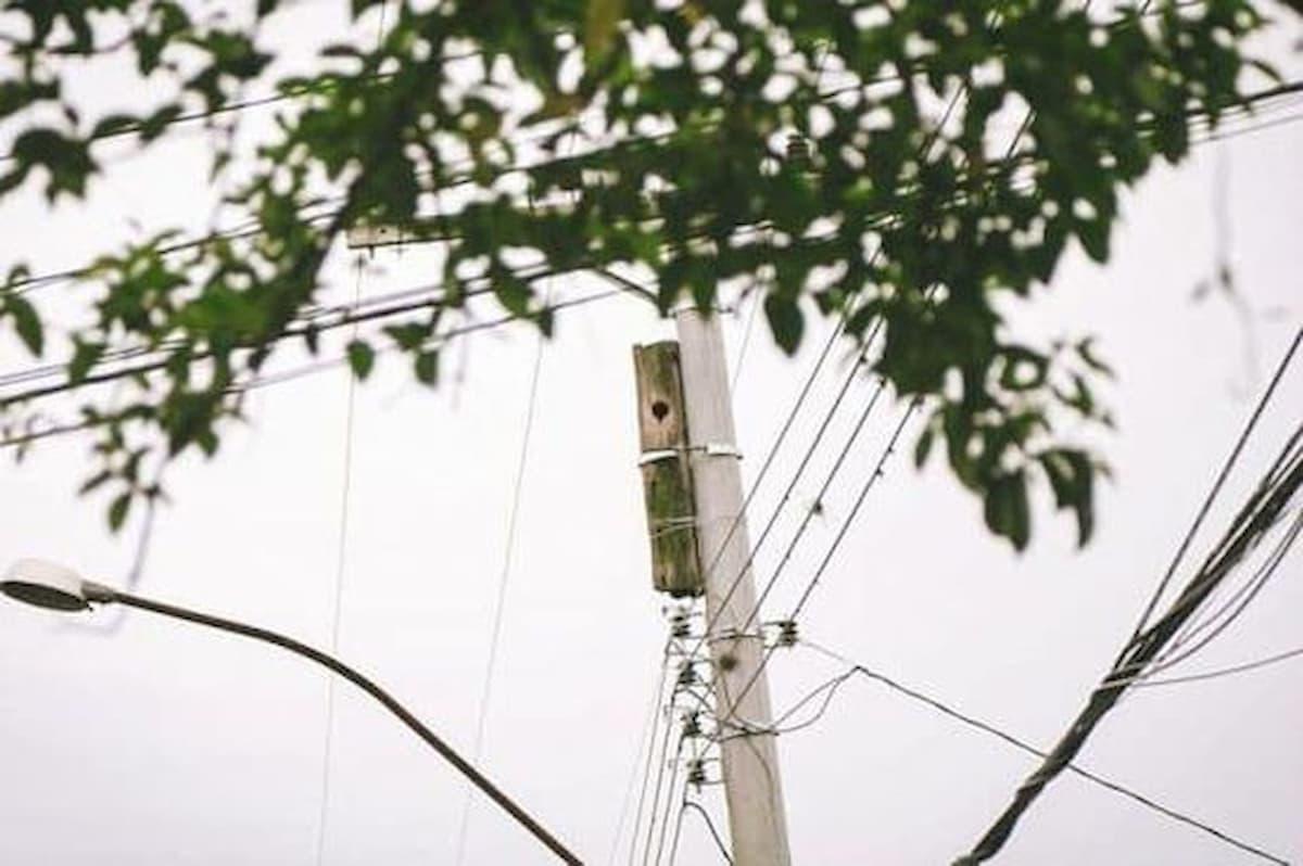 poste de cimento com a casa do pássaro tucano amarrado