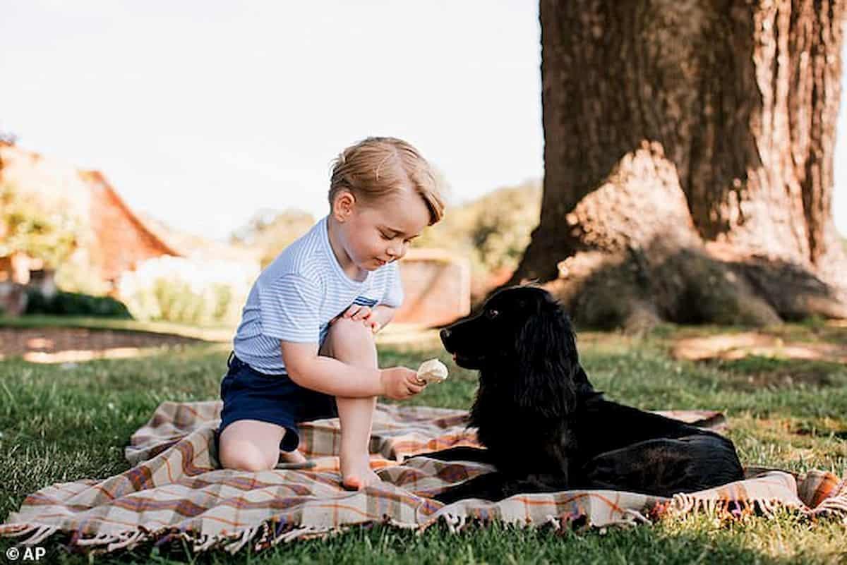 cão cocker spaniel inglês com príncipe george num piquenique